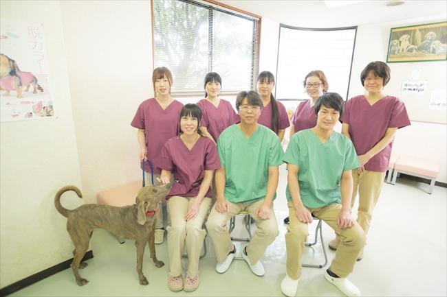 岡山 動物 医療 センター