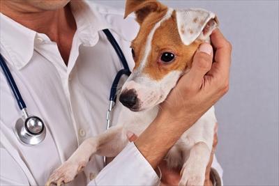 ワクチン副反応について